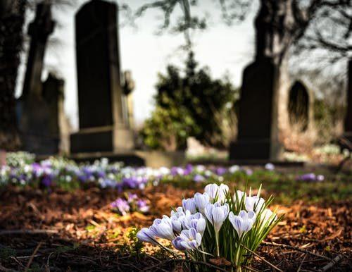 4 graveyard-church-crocus-cemetery-161280